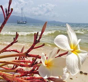 Frangipani with sailboat Karl on a beautiful beach in San Blas