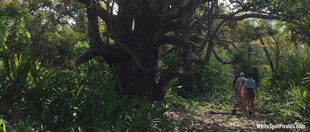 San Blas Adventures: jungle hike